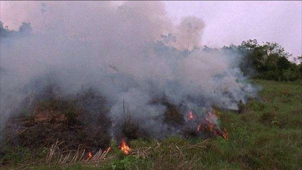 Hand-held shot of burning foliage in Brazil Rights-managed stock video