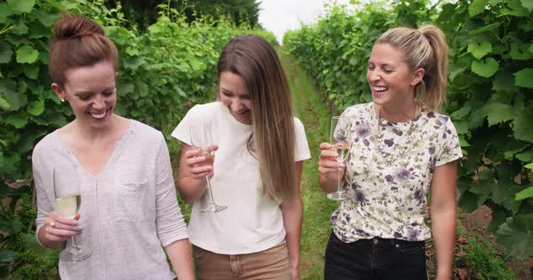 3 young adult women walking in vineyard with wine Royalty-free stock video