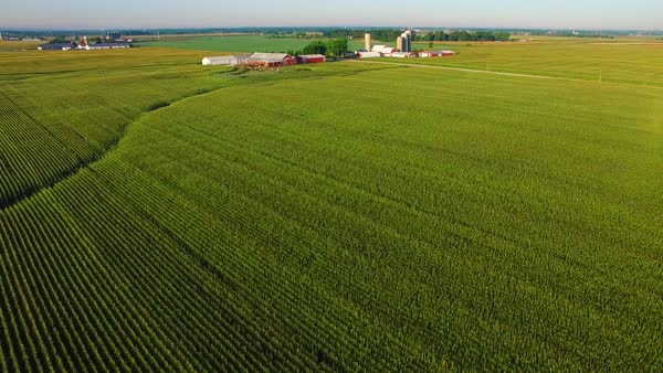 Strikingly beautiful aerial view of mature corn fields, farms in distance. Royalty-free stock video