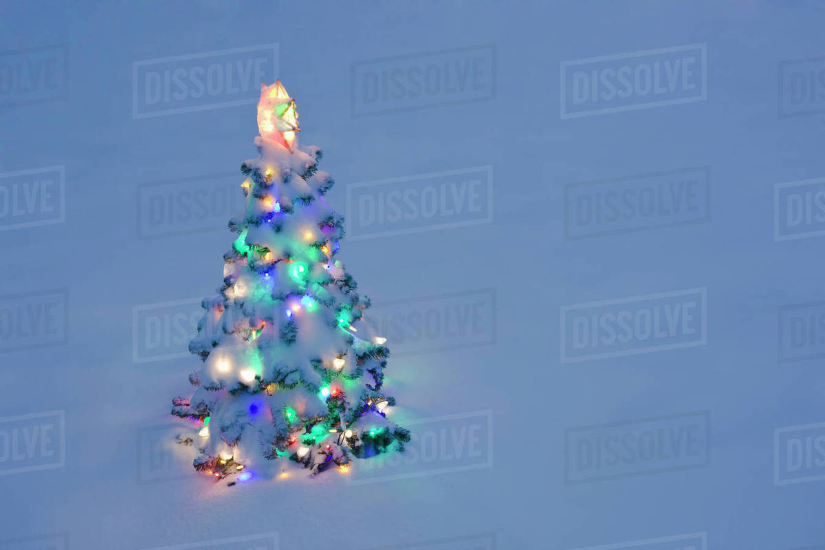 Christmas Tree Outside.Lit Christmas Tree In Snow Outside During Winter At Twilight Stock Photo