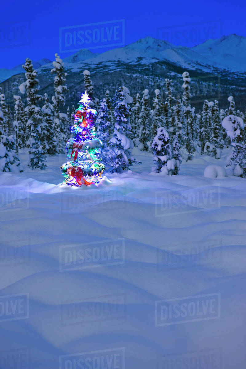 Mountain Christmas Tree.Christmas Tree With Multicolored Lights Standing On Snow Covered Tundra At Twilight Chugach Mountains In The Background Winter Anchorage Alaska