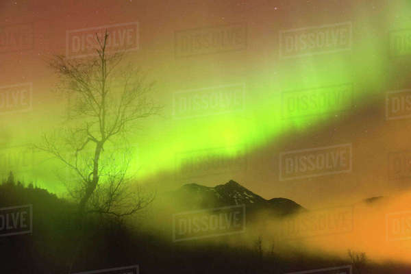 Northern Lights in the sky above Moose Pass, silhouetted trees and the Kenai Mountains, fog and low clouds, Fall, Chugach National Forest, Southcentral Alaska, USA. Rights-managed stock photo