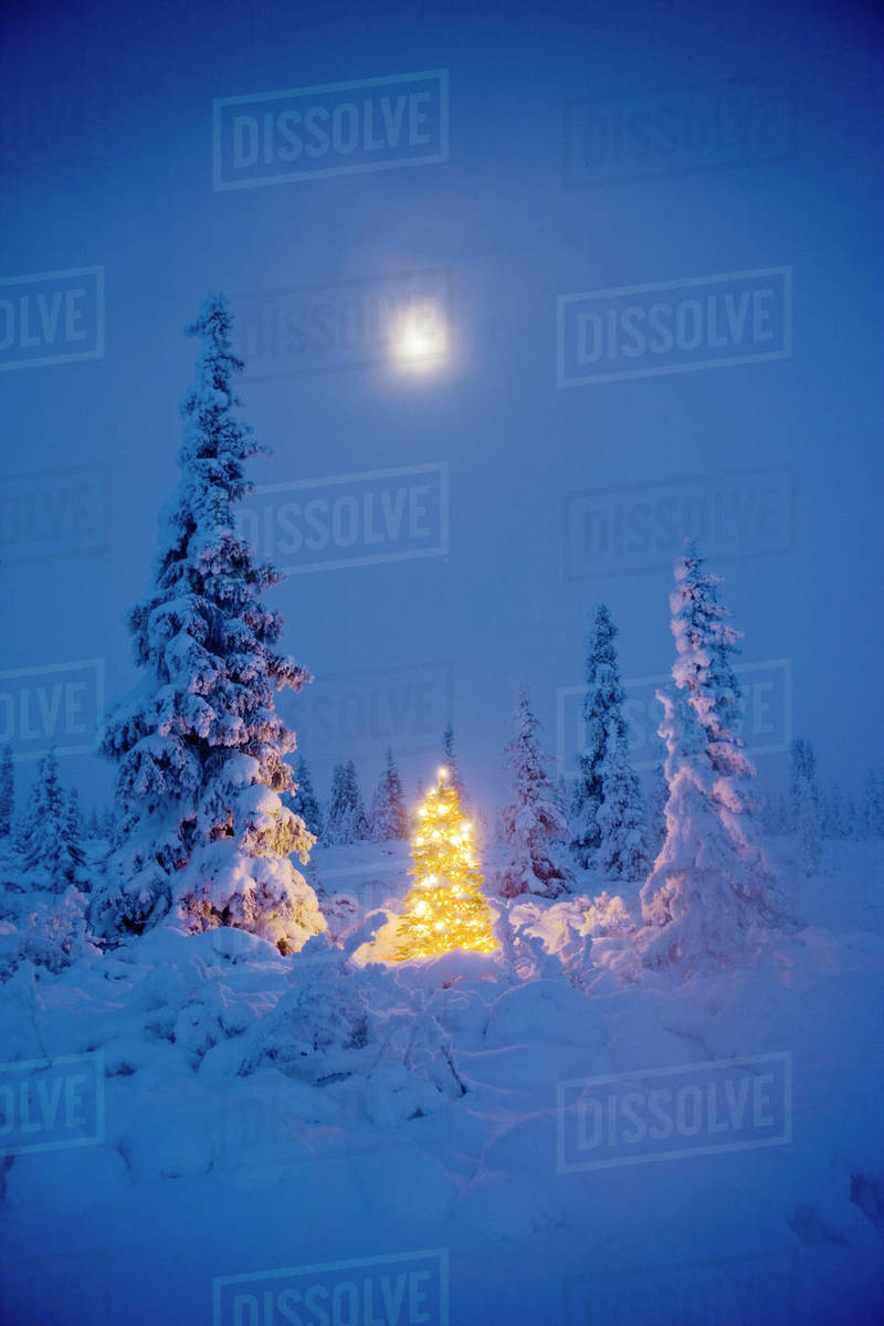christmas tree with white lights in a hoarfrost covered spruce forest moonlight fog winter eureka summit alaska