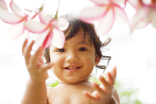 Hawaii, Oahu, Baby Girl Playing With Plumeria Flowers. Rights-managed stock photo