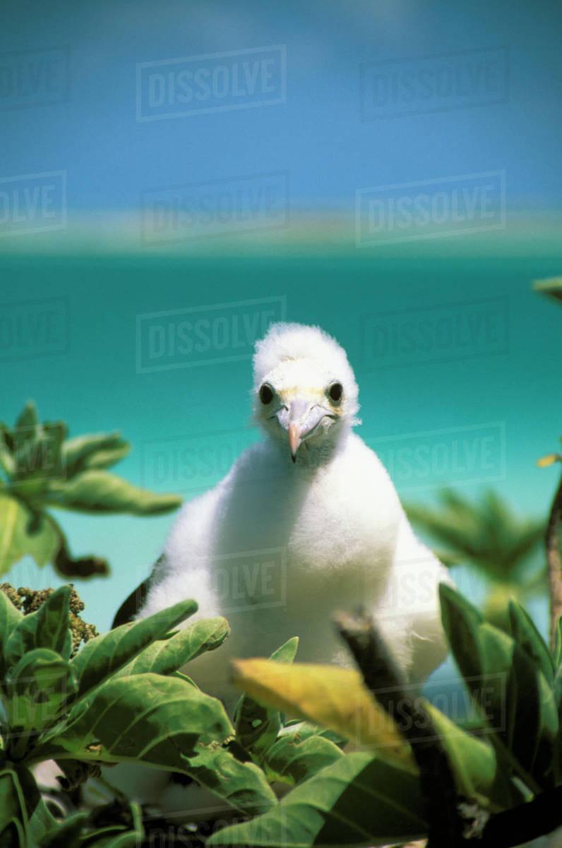 Kiribati, Kiritimati (Christmas Island), Close-Up Of Juvenile ...