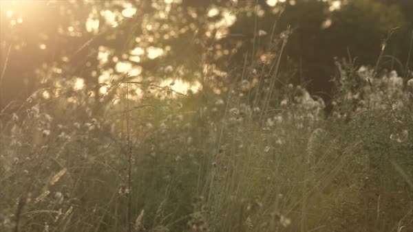 Panning shot of wildflowers on a field in Denmark Royalty-free stock video