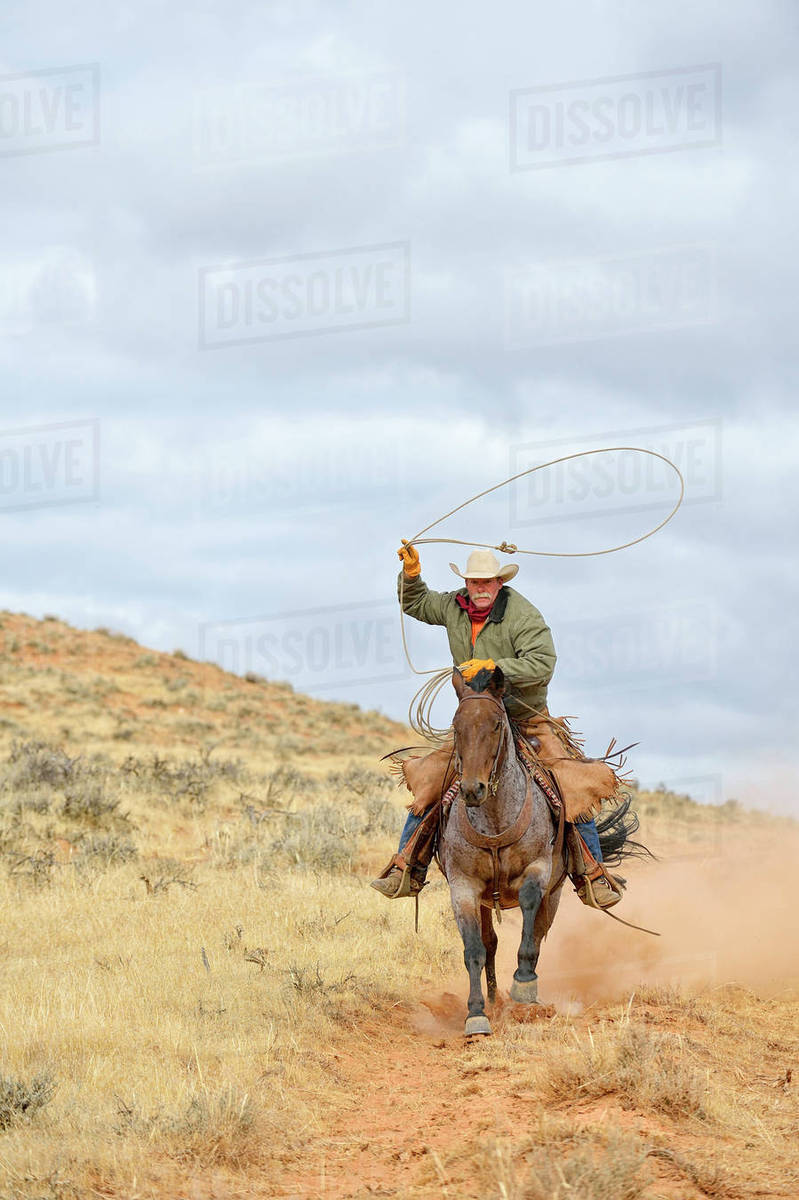 Cowboy Riding Horse With Lasso In Hand Shell Wyoming Usa Stock