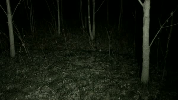 POV steadicam running through dark spooky forest at night. Royalty-free stock video