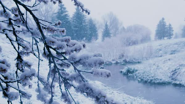 Snow falls upon a tree branch and small creek. Royalty-free stock video