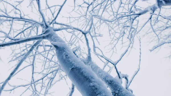 Looking up at a barren tree through heavy snowfall. Royalty-free stock video