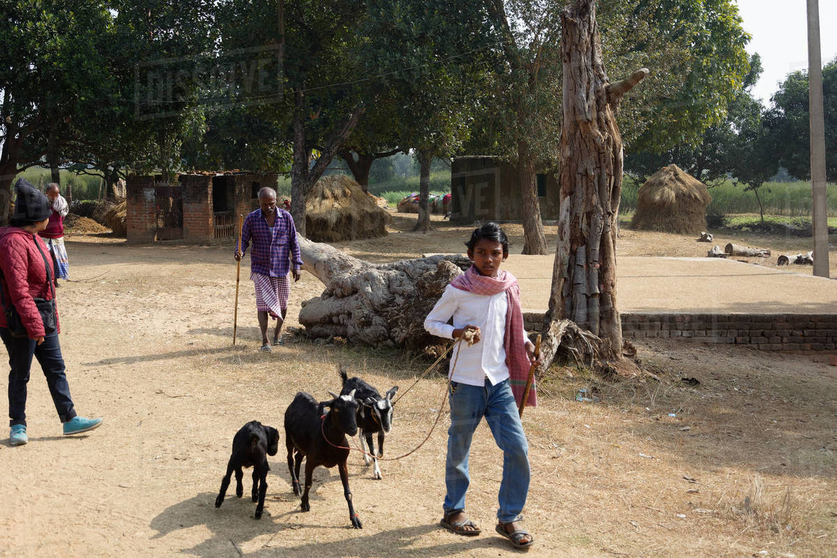 Indian shepherd boy walking with goats in a field with other men Royalty-free stock photo