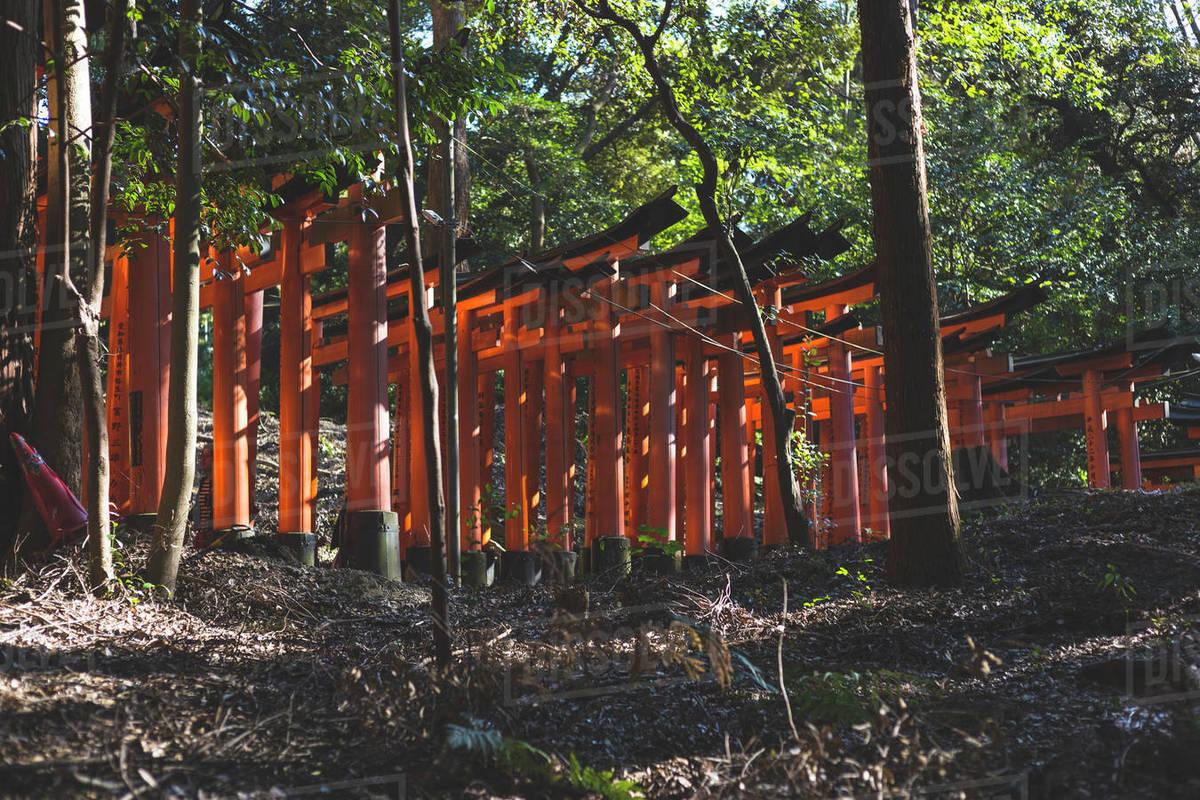 Torii gates at Fushimi Inari shrine in kyoto, japan Royalty-free stock photo