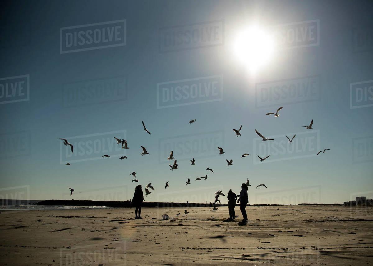 People feeding seagulls at sunset at Galveston, Texas beach. Royalty-free stock photo