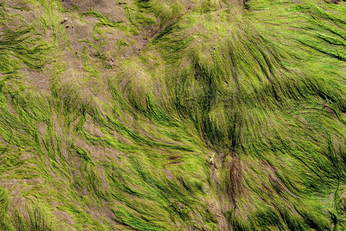 Close up of moss covering the rocks Royalty-free stock photo