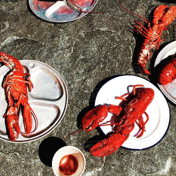 High angle view of lobsters in plates on rock during sunny day Royalty-free stock photo