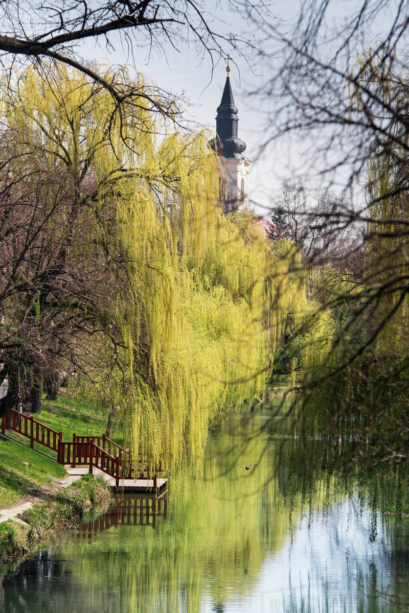 Trees reflected on the gloss of the river, in spring Royalty-free stock photo