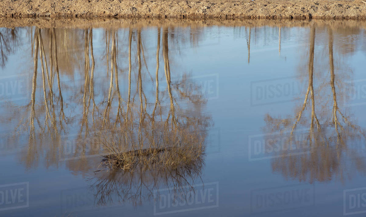 Reflection of trees and shrubs in the water Royalty-free stock photo
