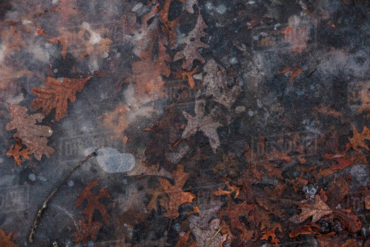 Frozen Pond Royalty-free stock photo