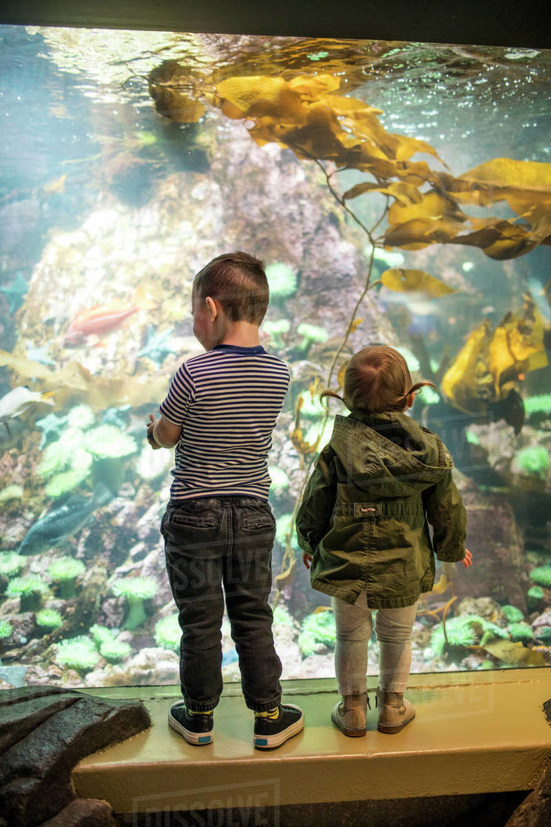 Two children looking at sea life in an aquarium. Royalty-free stock photo