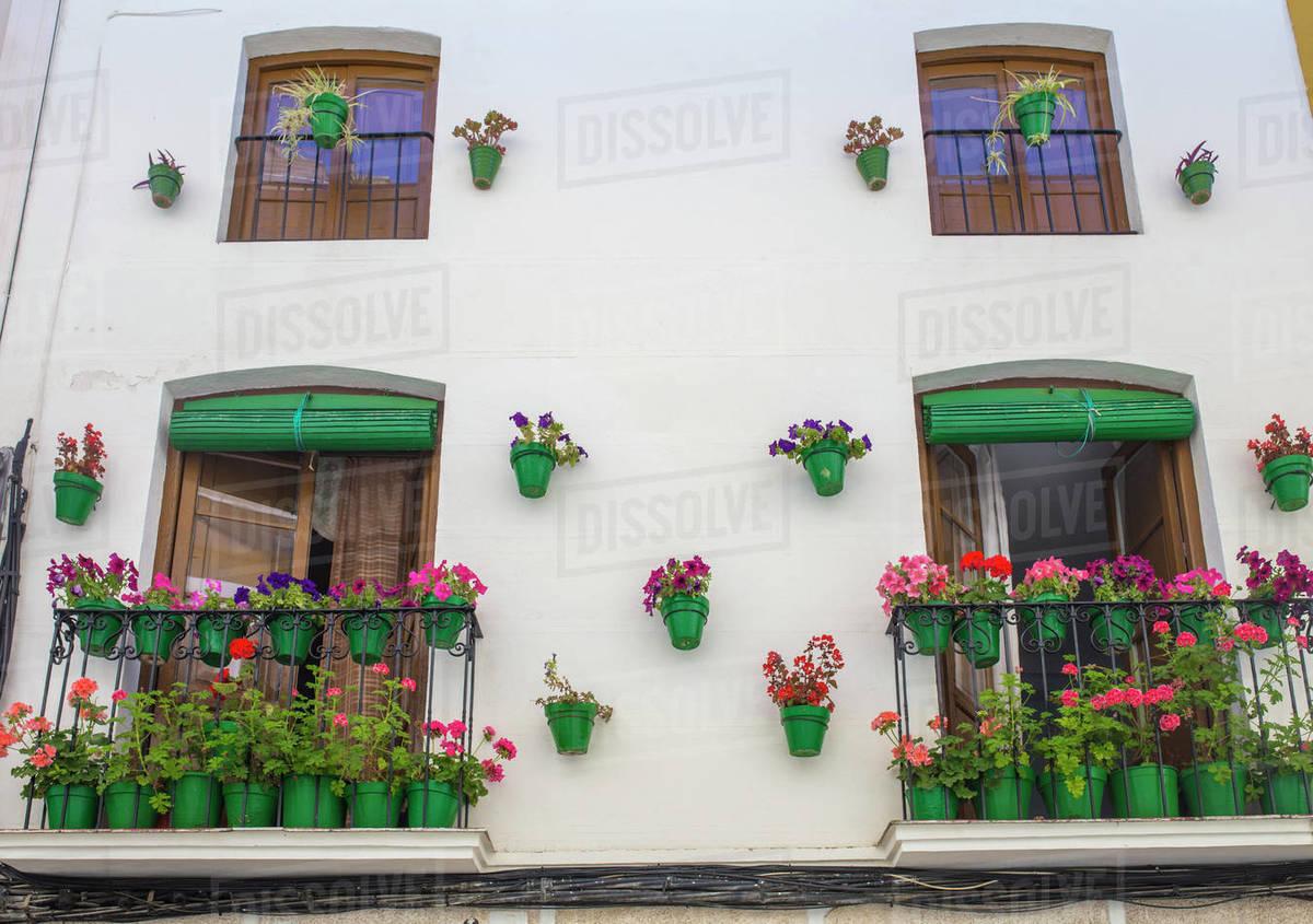 House facade full of green plowerpots Royalty-free stock photo