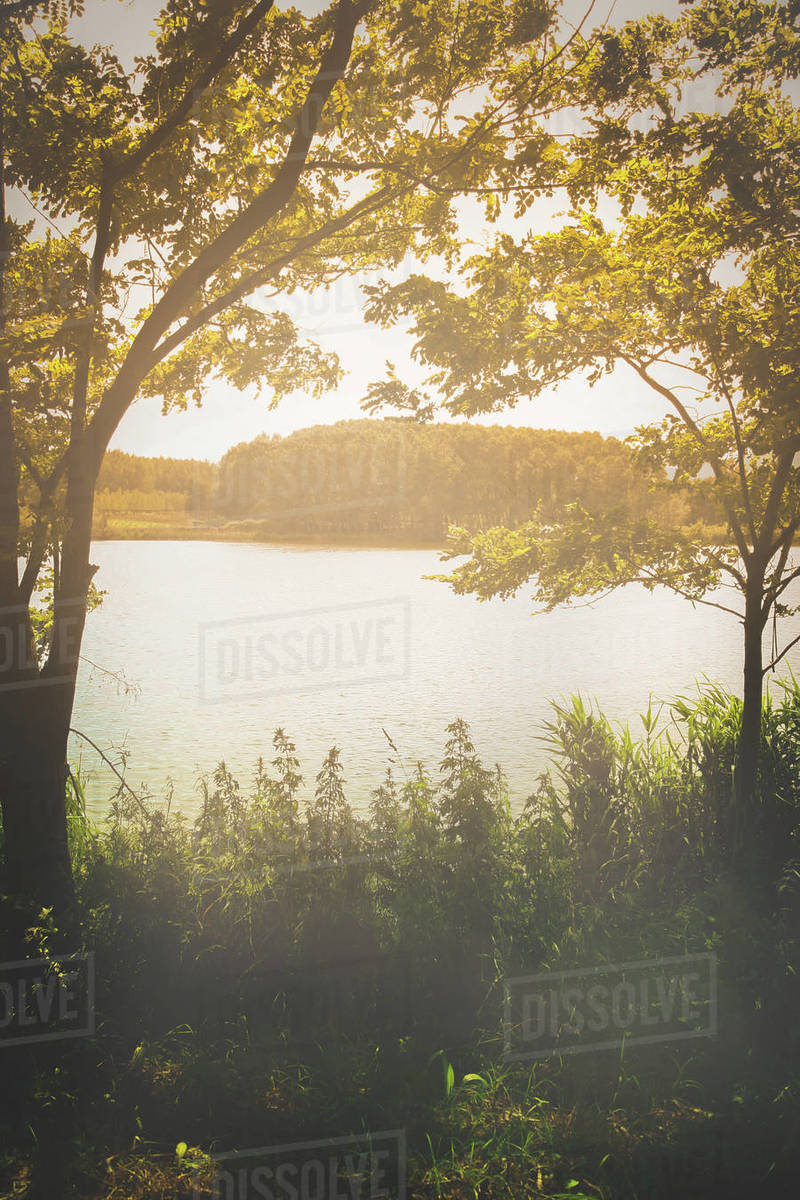 River bank with mist and sunlight Royalty-free stock photo