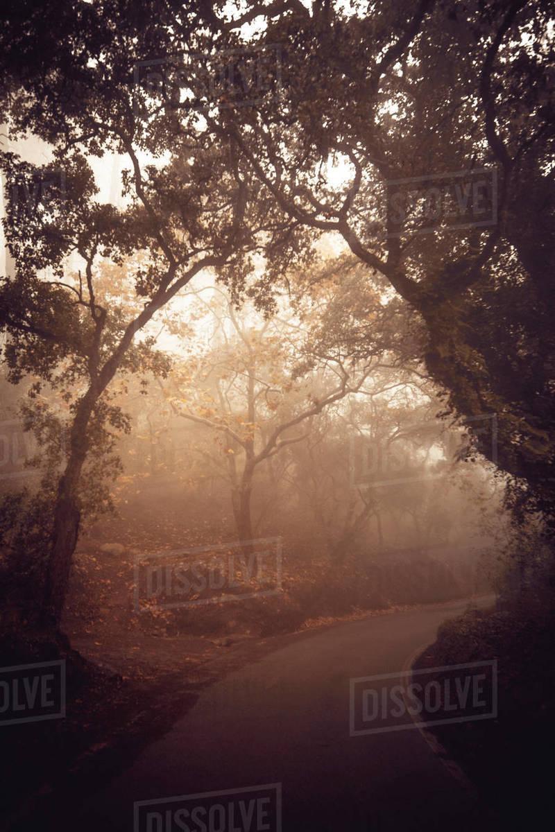 Mystical road towards the Palacio de Regaleira with fog Royalty-free stock photo