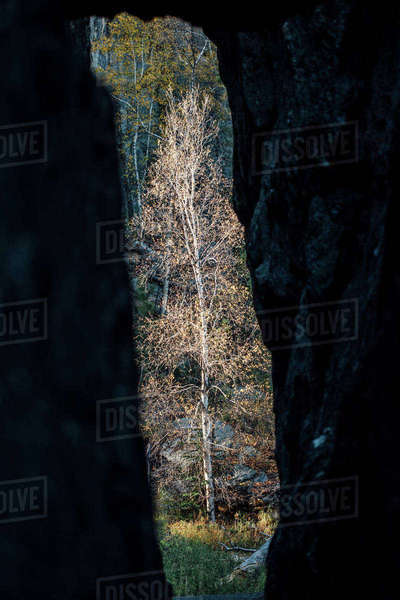 Tree seen through cave in forest Royalty-free stock photo
