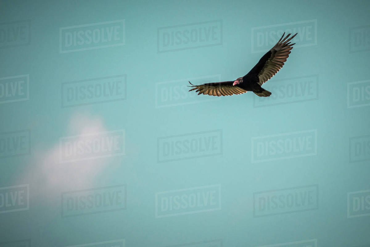 low angle view of bird flying in blue sky stock photo dissolve