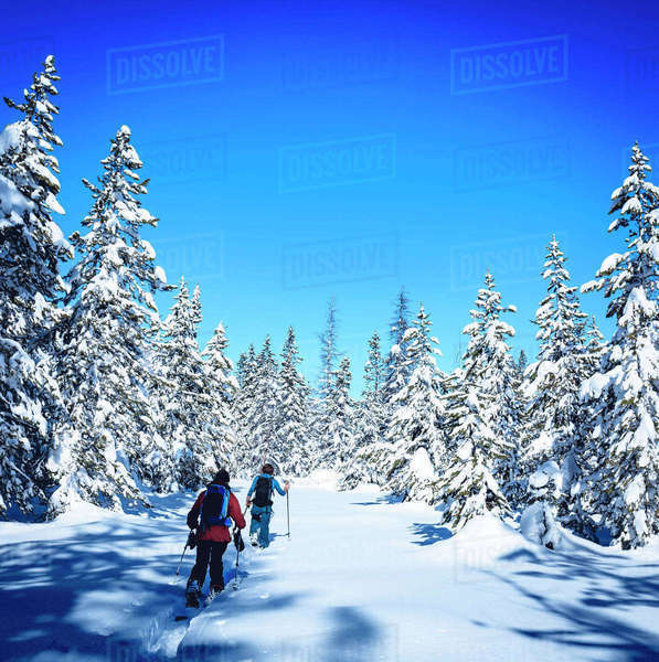 Skiers walking on field amidst snow covered trees against blue sky Royalty-free stock photo