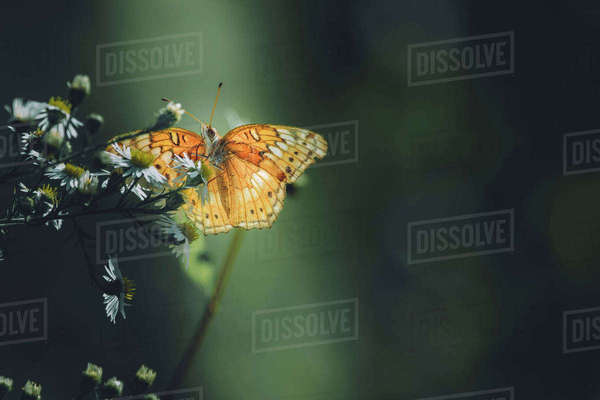 Close-up of butterfly on flower at park Royalty-free stock photo