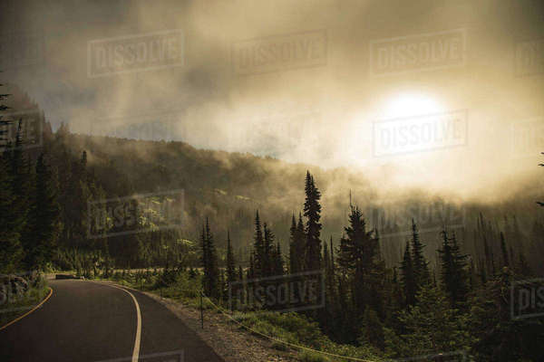 Road by trees against sky at Mount Rainier National Park during foggy weather Royalty-free stock photo