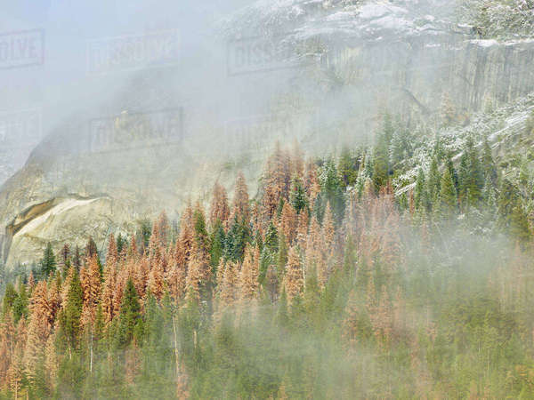 Scenic view of trees and mountains at Yosemite National Park during foggy weather Royalty-free stock photo