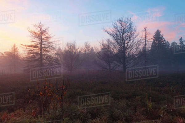 Bare trees on field at provincial park during sunset Royalty-free stock photo