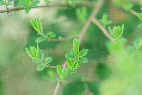 Close-up of leaves growing on branch at park Royalty-free stock photo