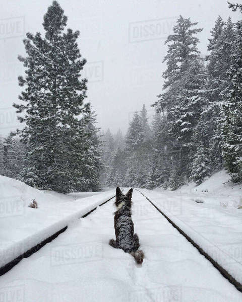 Rear view of dog sitting on snow covered railroad track Royalty-free stock photo