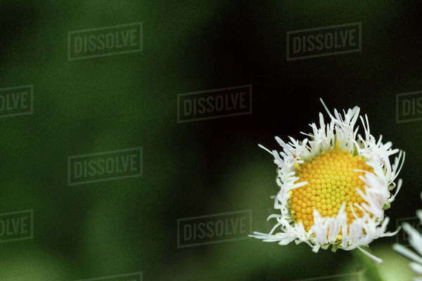 Close-up of flower growing at park Royalty-free stock photo