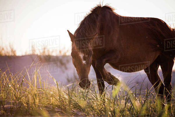 Horse grazing on grassy field against sky Royalty-free stock photo