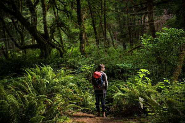 Rear view of female hiker with backpack standing amidst forest at Redwood National and State Parks Royalty-free stock photo