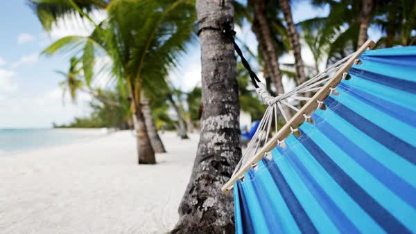 Close-up of blue hammock swinging on tropical beach Royalty-free stock video