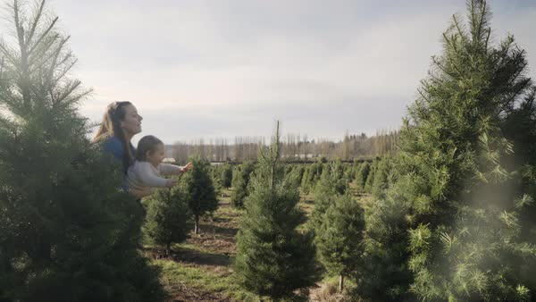 Medium shot of a mother showing pine trees to her child Royalty-free stock video