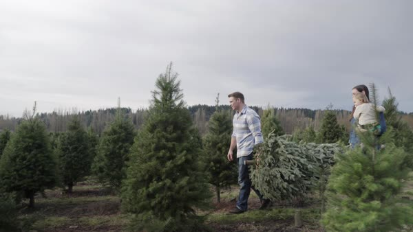 Wide shot of family carrying a pine tree at a tree farm Royalty-free stock video