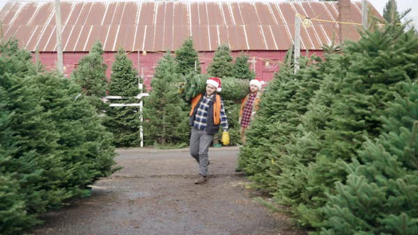 Medium wide shot of staff carrying a tree at a pine tree farm Royalty-free stock video