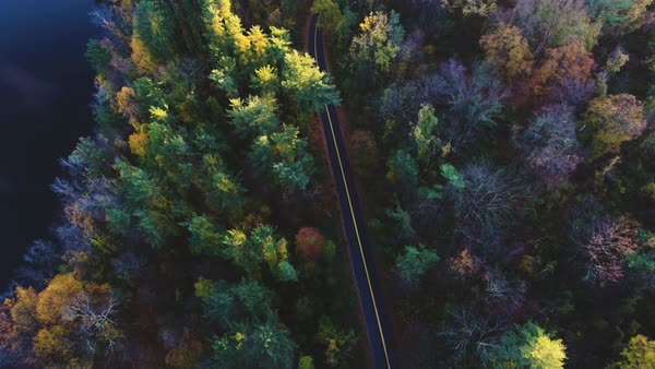 An aerial shot of a country road in the woods in autumn Royalty-free stock video