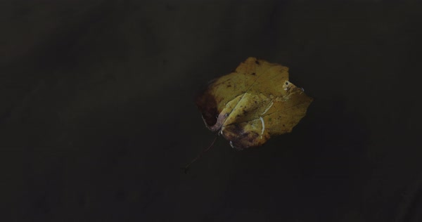 Hand-held shot of a fallen leaf drifting in water Royalty-free stock video
