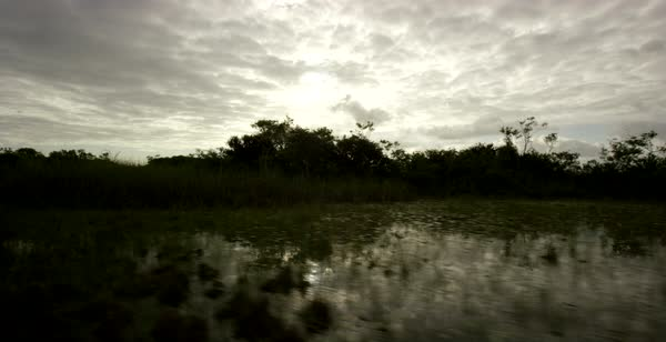 Hand-held shot of a marshland in Florida seen from a moving boat Royalty-free stock video