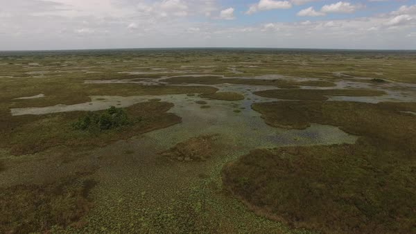Aerial shot of a vast marshland in Florida Royalty-free stock video