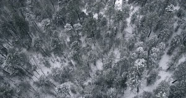 Snow in mountain forest, Santa Fe, New Mexico, United States Royalty-free stock video