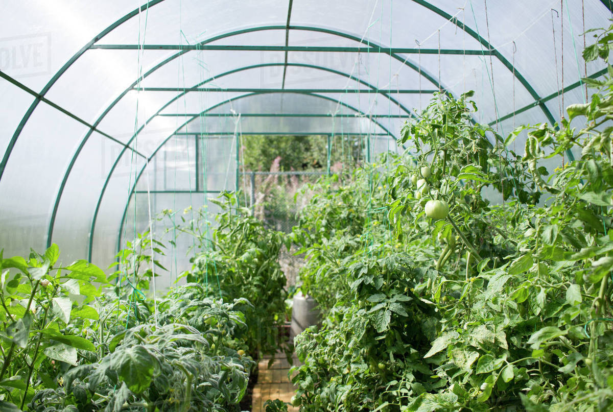 Vegetable garden in greenhouse Royalty-free stock photo