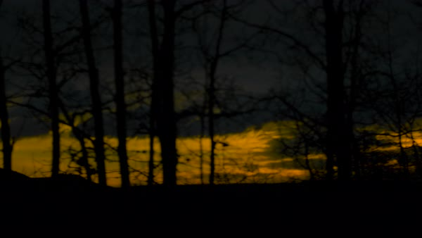 Dolly shot of silhouette of trees against colorful sky Rights-managed stock video