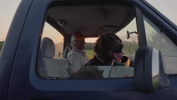 Hand-held shot of a man petting his dog in a truck Royalty-free stock video